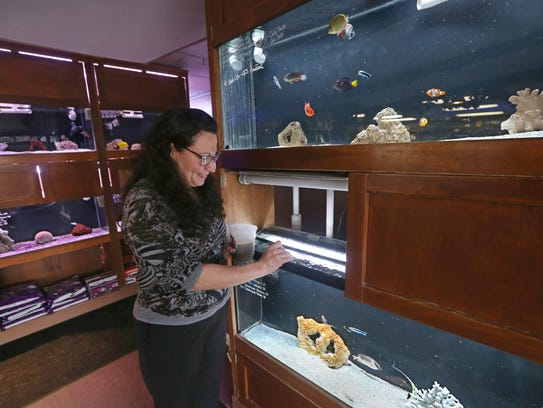 Milly Smith feeds the fish in one of her dozens of salt water tanks at Caribbean Forest fish and aquarium shop in Irondequoit.