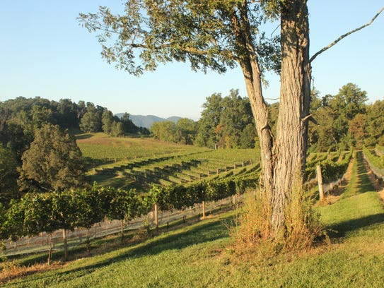 The view at Addison Farms Vineyard.