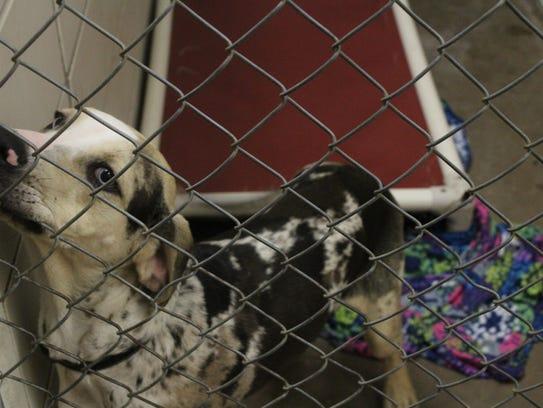 Bossier Parish Animal Control Quot We Will Not Stop Taking Them Quot