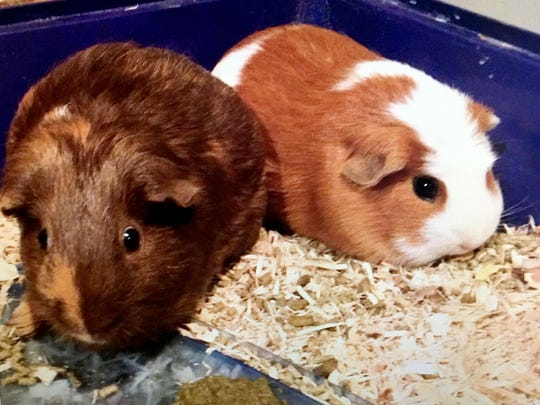 Coco, left, pictured with Hiccup. They were the classroom