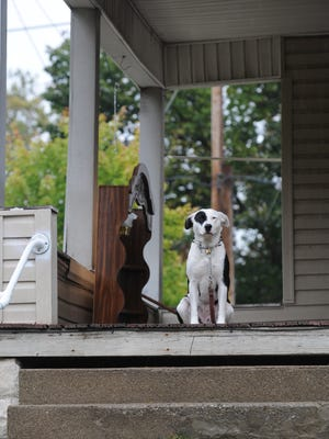 A dog sits under the cover of a porch as rain falls in Richmond.