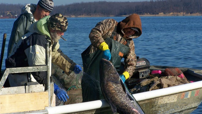 A multi-year effort by the Fisheries Division of the Kentucky Department of Fish and Wildlife Resources to help reduce the population of Asian carp by working with fish processors and the commercial fishing industry should bear fruit in 2017.