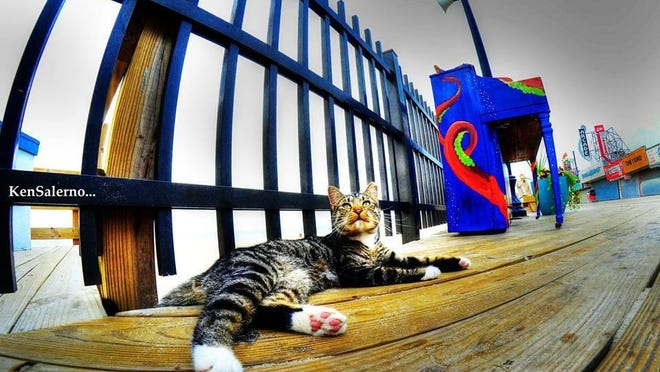 A cat rests on the Seaside Heights boardwalk. The borough is considering moving feral cats from the area.