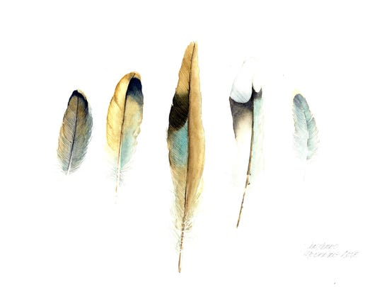 """""""Mourning Dove Feathers"""" by Jennifer Hero, part of the Wisconsin Watercolor Society exhibit opening Sept. 17 at the Miller Art Museum."""