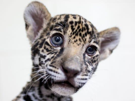 wildlife1