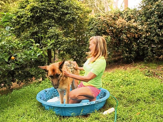 People look to hybrid cars or energy-saving appliances to reduce their carbon footprints, but you can go green with your pets, too, including using earth friendly pet shampoo.