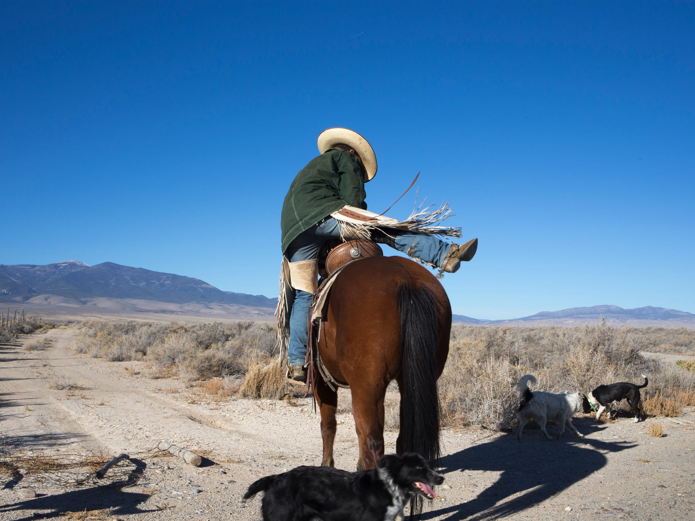 Randy Elmer mounts his horse before moving 130 head
