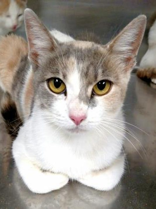 Pet of the day 1021