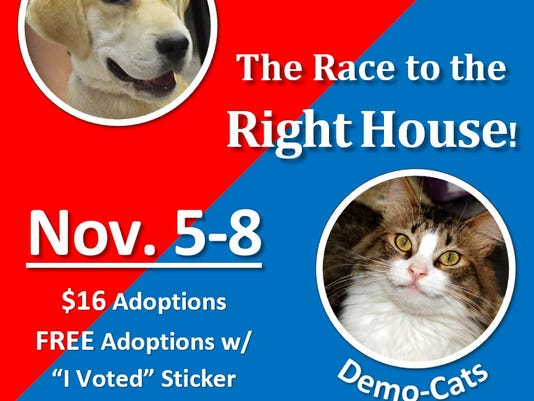 Dog and cat adoptions special
