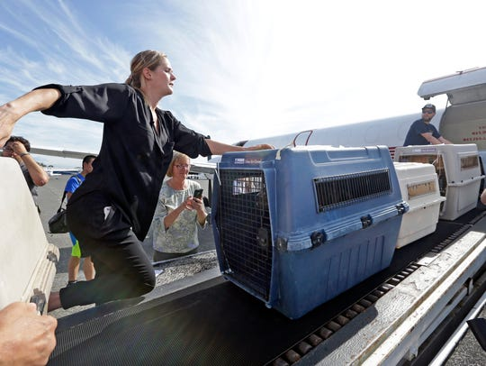 Volunteers unload 35 dogs from Texas shelters flown