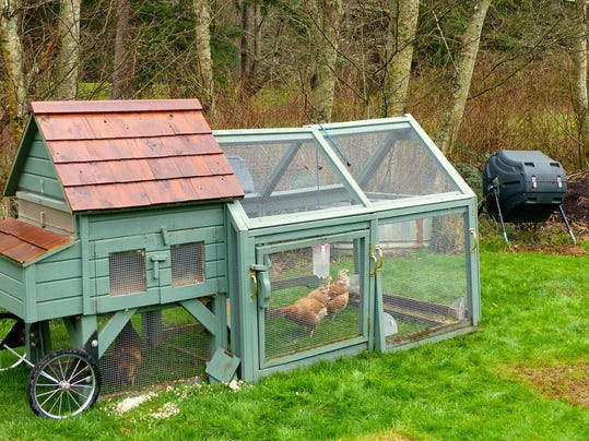 how to use chicken manure in the garden