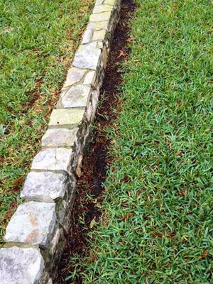 Contributed by Neil Sperry Chinch bugs might be behind this damage, but the more likely cause is an overzealous gardener with a weed eater.
