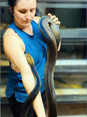 Snake lover Kacey Williamson, pictured with one of her pet snakes, is offering free snake removal for Pueblo West residents.