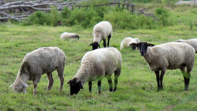 Preparation is the key to success when adding more sheep to your farm.