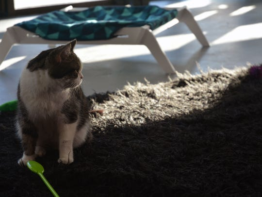Dew Berry was rescued from a home in Flagstaff where