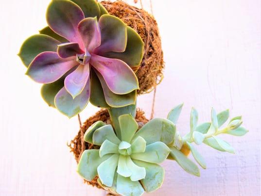 636130971974201069-kokedama-succulent.jpg