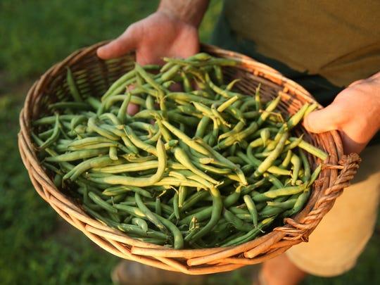 Green beans from Green Door Gourmet, an organic farm