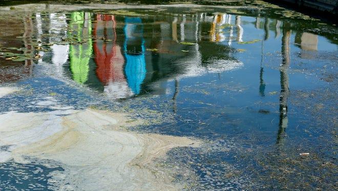 Algae and foam in Canandaigua Lake.