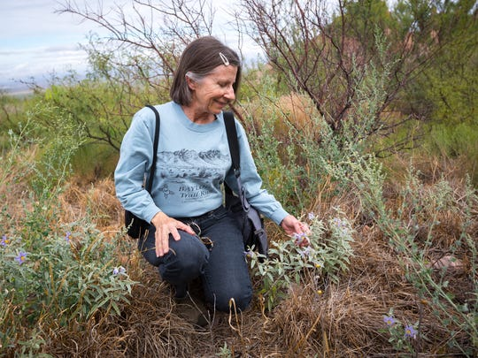 Carolyn Gressitt looks at members of the tomato family at the Dripping Springs Natural Area, which is now part of the new national monument. Gressitt is Las Cruces chapter president of the Native Plant Society of New Mexico.