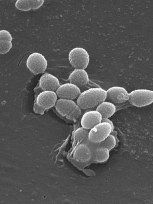 Enterococcus