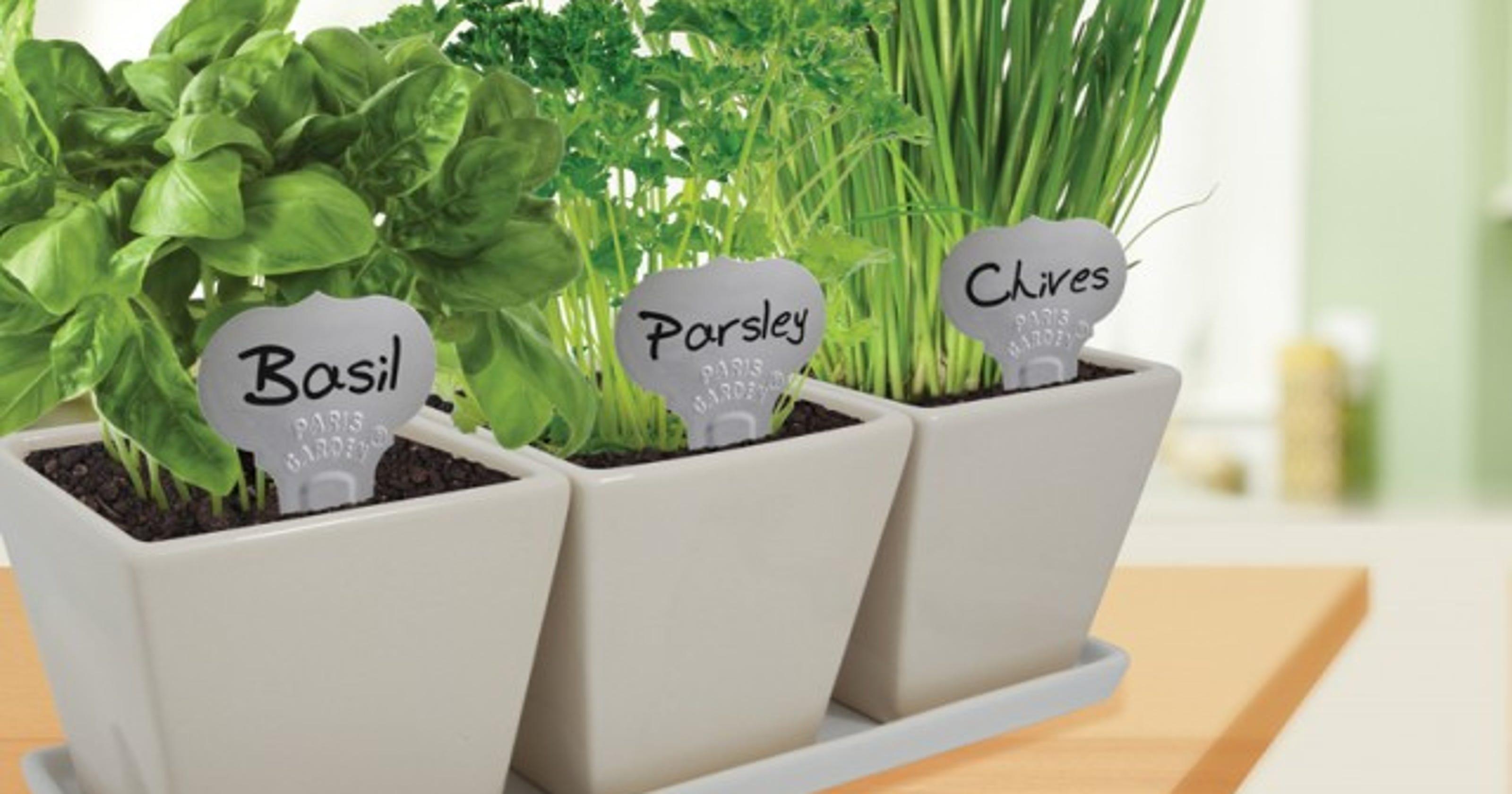 Grow a winter herb garden indoors - Herbs that can be grown indoors ...