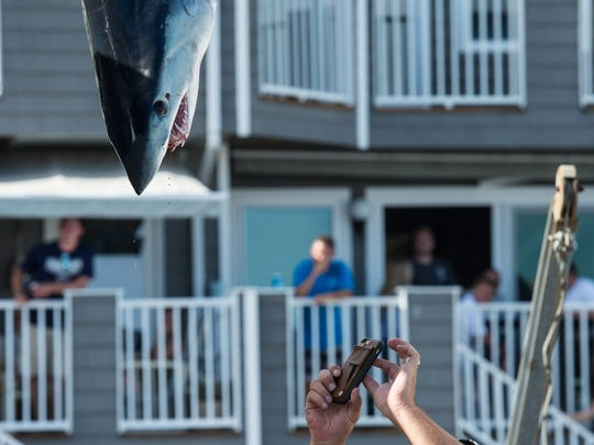 A crew member of the Restless Lady takes a photo of his 126 pound shark during the White Marlin Open on Friday, Aug. 11, 2017.