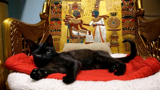 In this photo, a cat rests on the throne bed in the King Tut-theme cat playroom at the Oregon Humane Society in Portland, Ore. Modern-day cats have not yet become associated with deities as they were in ancient Egypt, but the Internet has gotten them a little closer.