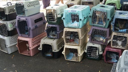 Nearly 100 cats stack up in cages following their seizure in  Royal Oak, but virtually all are headed for adoption now.
