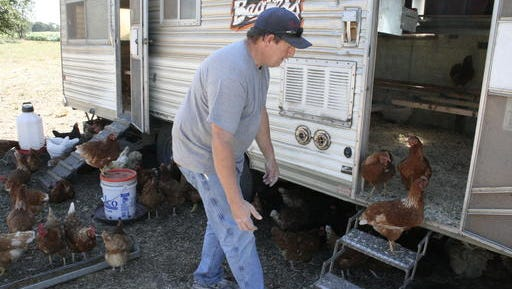 In this Aug. 1, 2016, photo farmer Kevin Hobbs visits with his chickens at his family's property near Turner, Ore. Demand for local eggs is strong among grocery stores and restaurants as a growing number of egg handlers face more competition. The Capital Press reports the number of Oregon-licensed egg handlers more than doubled in the last decade. (Mateusz Perkowski/The Capital Press via AP) MANDATORY CREDIT