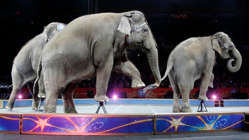 "FILE - In this May 1, 2016 file photo, Asian elephants perform for the final time in the Ringling Bros. and Barnum & Bailey Circus in Providence, R.I. The Ringling Bros. and Barnum & Bailey Circus will end ""The Greatest Show on Earth"" in May 2017, following a 146-year run. Declining attendance combined with high operating costs, along with changing public tastes and prolonged battles with animal rights groups all contributed to its demise."