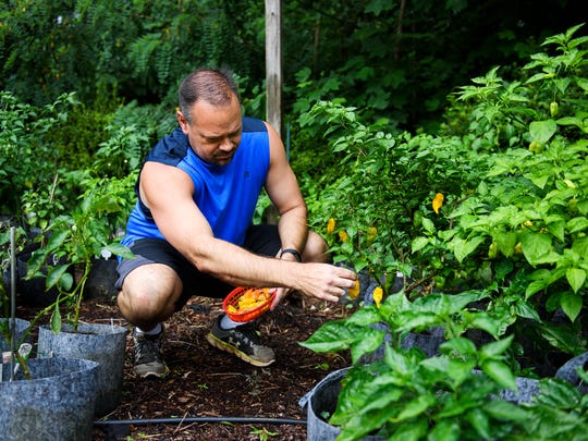 Jason Tate of Mauldin tends to his pepper garden at his home on Thursday, June 28, 2018.