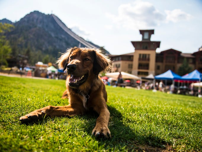 Peaks and Paws Festival rolls out docent-led hikes,