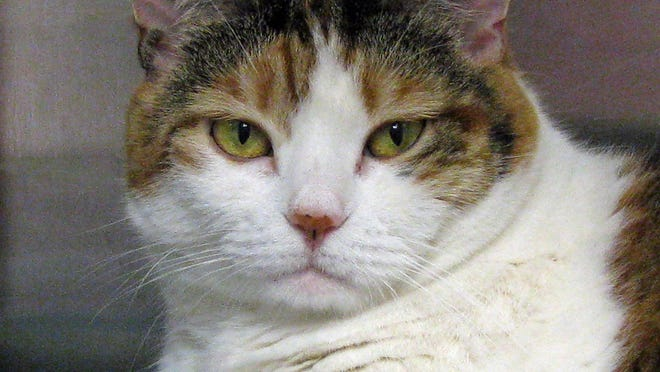Eight-year-old Taffy is ready for adoption.