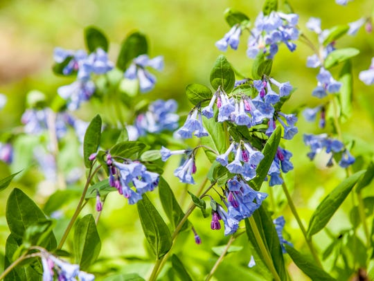 Tour guides with Red-Tail Conservancy's Spring Wildflower