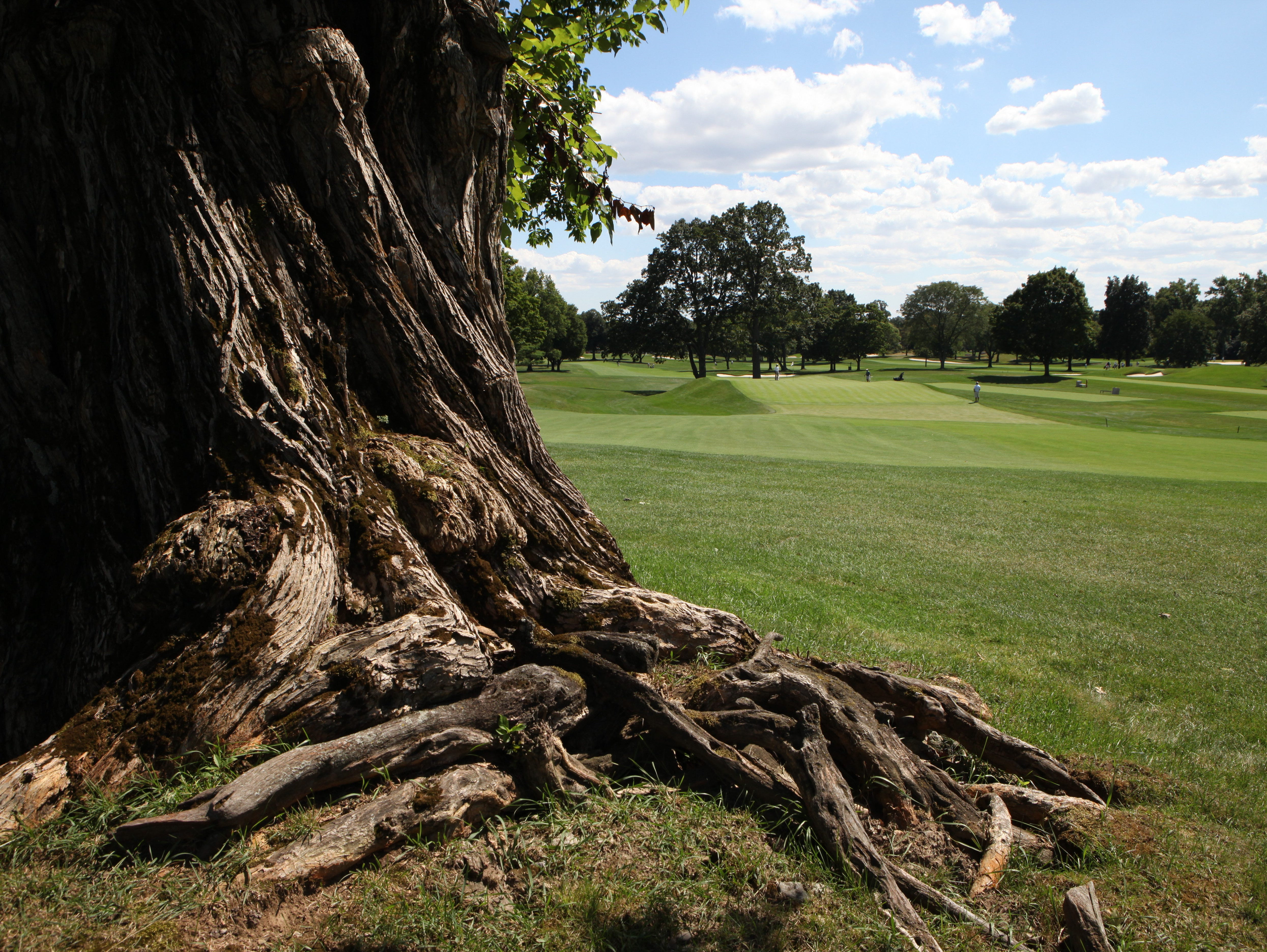 A vintage Osage Orange tree is pictured along the fairway of the 17th hole on the East Course at the Winged Foot Golf Club in Mamaroneck, Aug. 13, 2015. The East Course, recently restored, is hosting the USGA Four-Ball Championship next spring.
