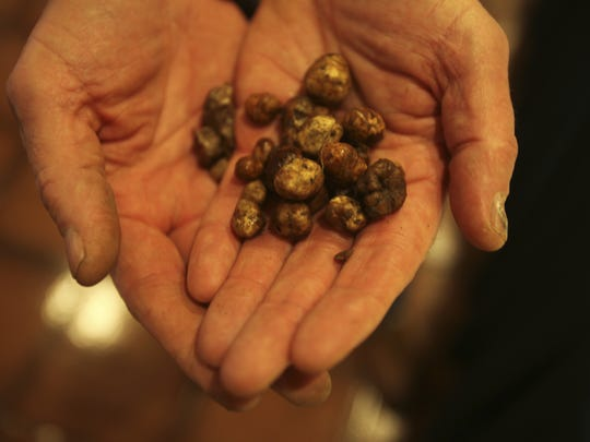 BLM is opening some public land to truffle hunting with a dog.