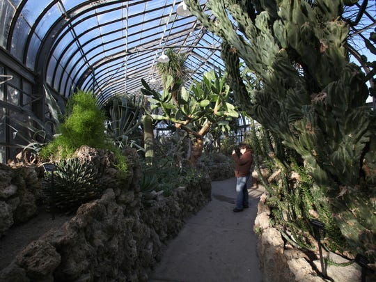 A plant enthusiast takes photos of plants at the Anna Scripps Whitcomb Conservatory at Belle Isle in Detroit  on Friday, February 07,  2014.