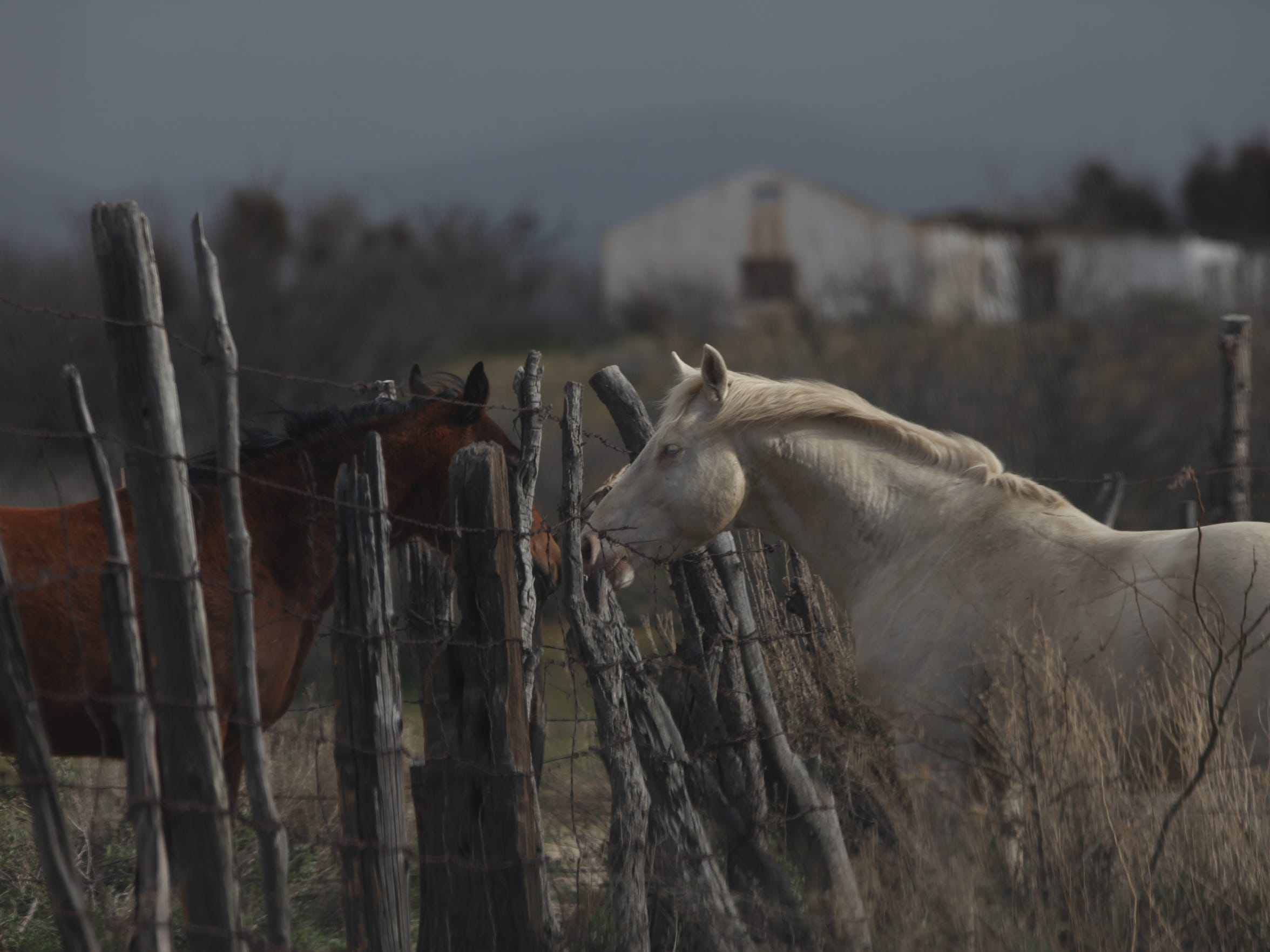 Horses roam openly in Jacume just a few hundred yards from the U.S./Mexico international border.