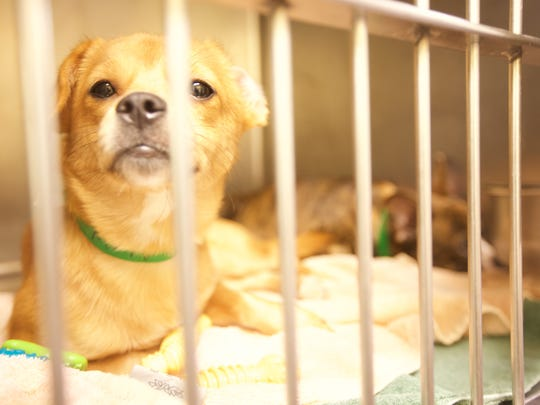The first of 276 dogs rescued from Howell was adopted Wednesday afternoon. Other dogs were being prepared for adoption.