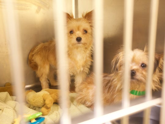 The first of 276 dogs rescued from Howell was adopted