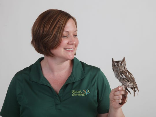 Megan Wing, of Busch Gardens Tampa Bay, holds a screech owl named Edgar which is one of many animal ambassadors Busch Gardens uses to educate the public.