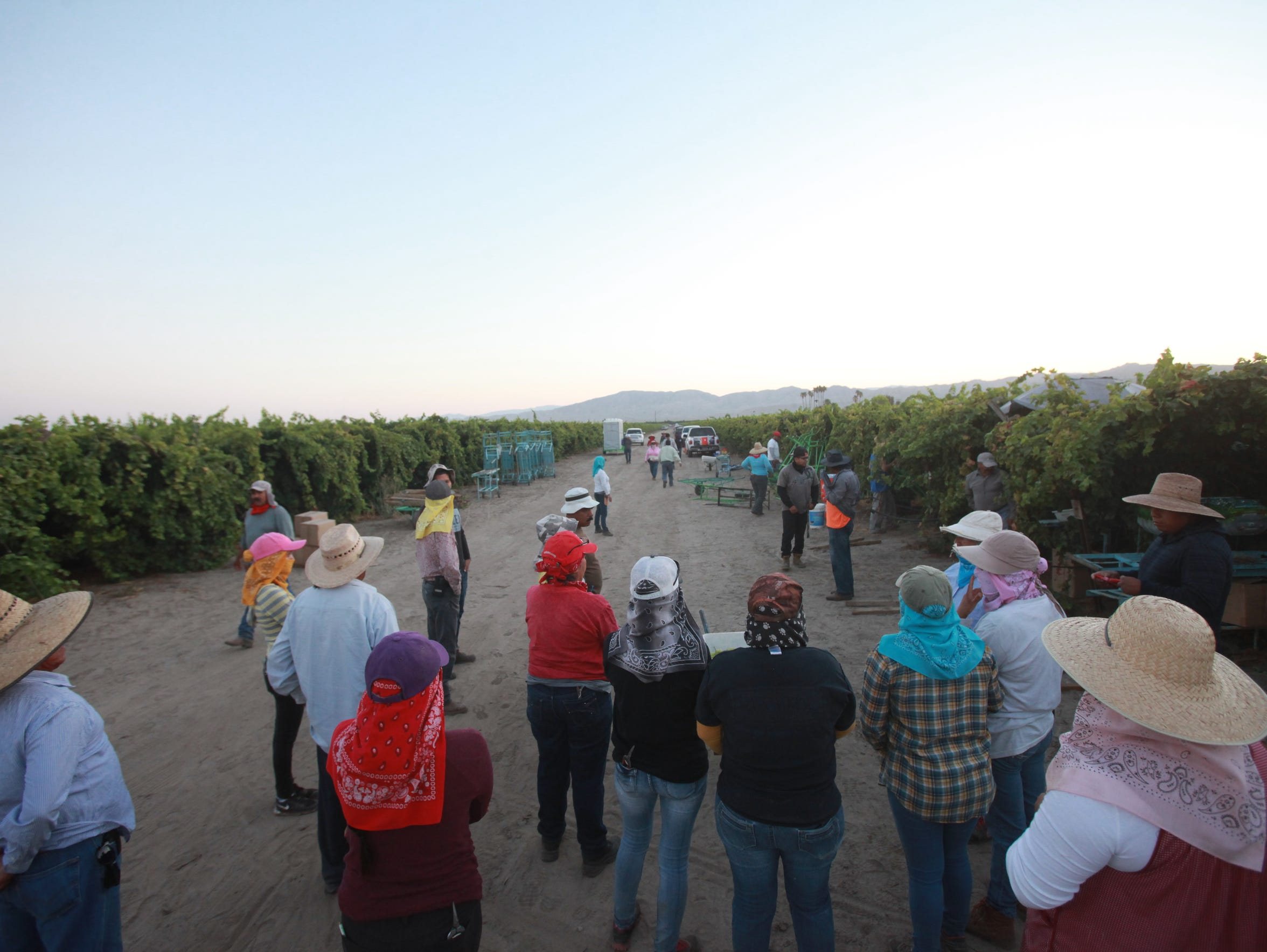 California's farmworker pool has decreased by 10 percent