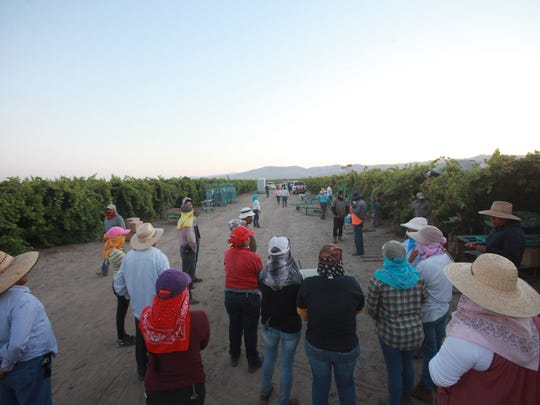 California's farmworker pool has decreased by 10 percent in the last 20 years. Nationally, it has dropped by 30 percent during the same time period. Because of the shortage, farmers have hired more foreign guest workers than ever before.