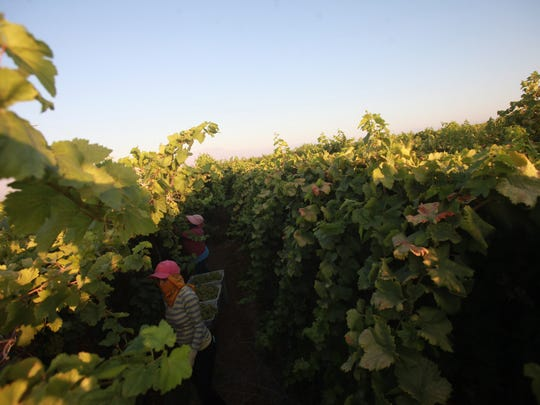 Labor advocates say a visa program that allows growers to hire foreign guest workers is costing local farmworkers their jobs. Advocates are calling for comprehensive immigration reform.