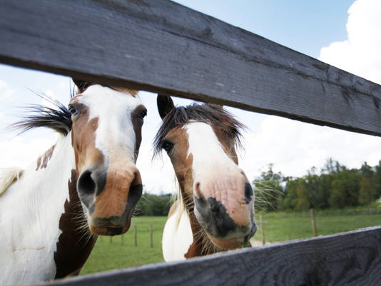 horse file photo.jpg