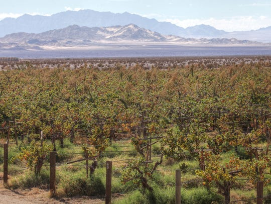 The company Cadiz Inc. grows table grapes on its property