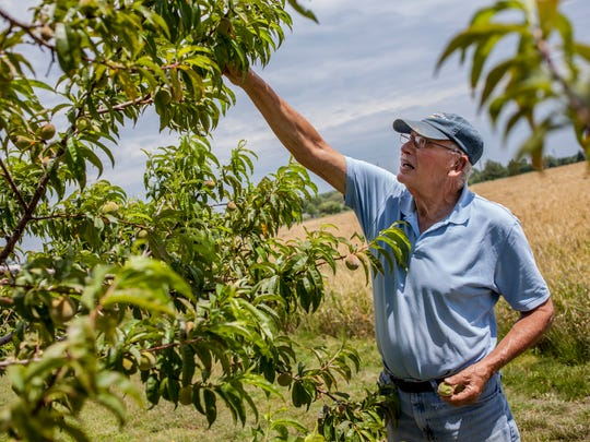 Marvin McCallum looks over a peach tree Thursday, June 29, 2017 at Marvin's Garden in Grant Township.