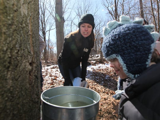 Environmental Educator, Kathleen Farley of East Rutherford points to where the sap comes out of the maple tree at the Tenafly Nature Center. The Tenafly Nature Center gave tours that included showing maple trees that are tapped for sap to make maple syrup on Sunday, March 22, 2015.