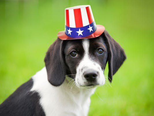 Puppy Wearing Patriotic Hat