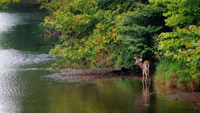 A deer ventures out into the waters of the Big Blue River near Knightstown, In. just before sunset on Sunday Sept. 17, 2006. (Mike Fender / The Indianapolis Star)
